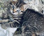 Милі кошенята